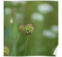 Blooming Grass Poster