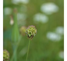Blooming Grass Photographic Print