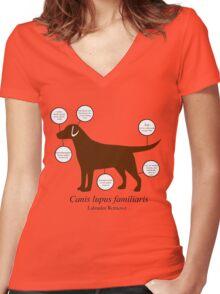 Anatomy of a Labrador Retriever Women's Fitted V-Neck T-Shirt