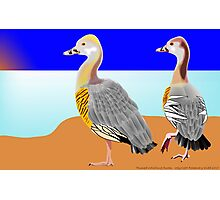 Plumed Whistling Ducks Photographic Print