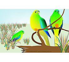 Orange Bellied Parrots Photographic Print
