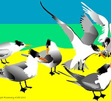 Crested Terns by rodesigns