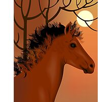 Horse and nature	 Photographic Print