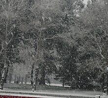 Snowstorm South NZ by bitsdraw