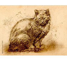 Romsey the Ginger Cat Photographic Print