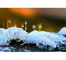 Snow Candles Photographic Print