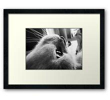 Mr Stampy Framed Print