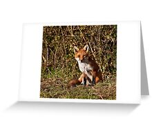 Mr Fox...or Mrs or Miss or Ms!!!! Greeting Card