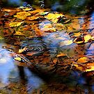 """Autumn in a Puddle ..."" by Rosehaven"