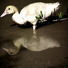 My first taste of a pond...My first look at me! by Berns