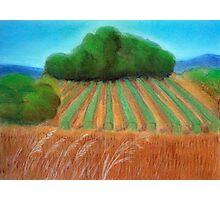 Annie's vineyard Photographic Print
