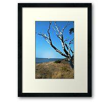 Desolate Tree Framed Print