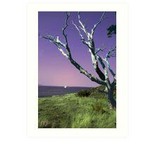 Desolate Tree (colorized) Art Print
