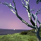 Desolate Tree (colorized) by James Zickmantel