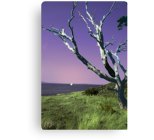 Desolate Tree (colorized) Canvas Print