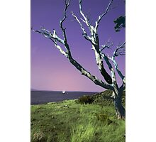 Desolate Tree (colorized) Photographic Print