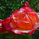 Stained Glass Rose by Trevor Kersley