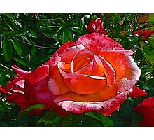 Stained Glass Rose Photographic Print