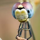 Dragonfly by scott leeson