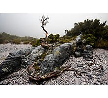 A dead heath maintains it's tenuous hold Photographic Print
