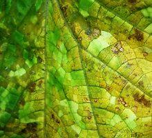 Nature's Mosaic  by Barefootsies