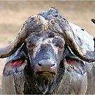 WHEN THE AFRICAN BUFFALO TAKES A MUD BATH by Magriet Meintjes