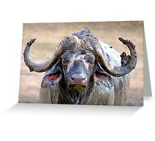 WHEN THE AFRICAN BUFFALO TAKES A MUD BATH Greeting Card