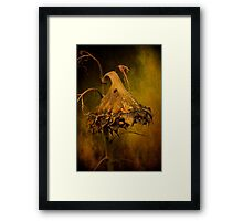 Summer Sorrow Framed Print