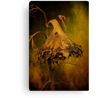 Summer Sorrow Canvas Print