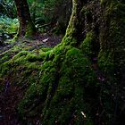 Mossy tree buttress by Michael Gay