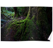 Mossy tree buttress Poster