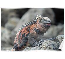 Laughing Iguana Poster