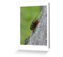 Wooly Fly Greeting Card