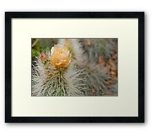 Unknown Cactus Flower Framed Print