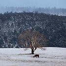 Winter Comfort by Asoka