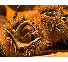 Chestnut a winner for BBC Photographic Print