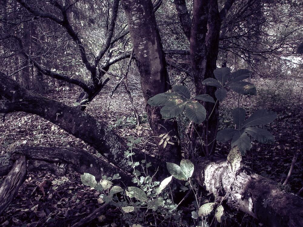 17.8.2010: Garden of Oblivion II by Petri Volanen