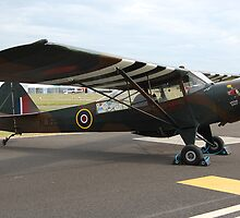 Auster Mk4 G-AJXV/NJ695 by Rees Adams