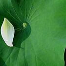 Yin Yang by bkphoto