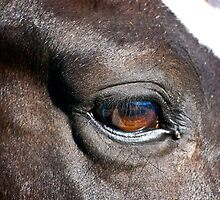 Horse Eye by imagetj