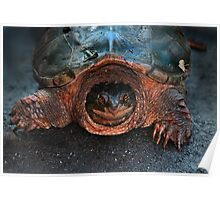Hello Giant Turtle ! Poster