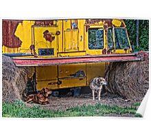 Dog Shelter  Poster