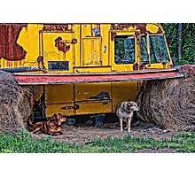 Dog Shelter  Photographic Print