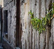 Turkish Street Scene: Peppers On The Wall by Josh Wentz