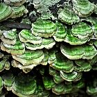 Green Fungi by Teresa Young