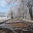 Arkansas' Ice storm  by David  Hughes