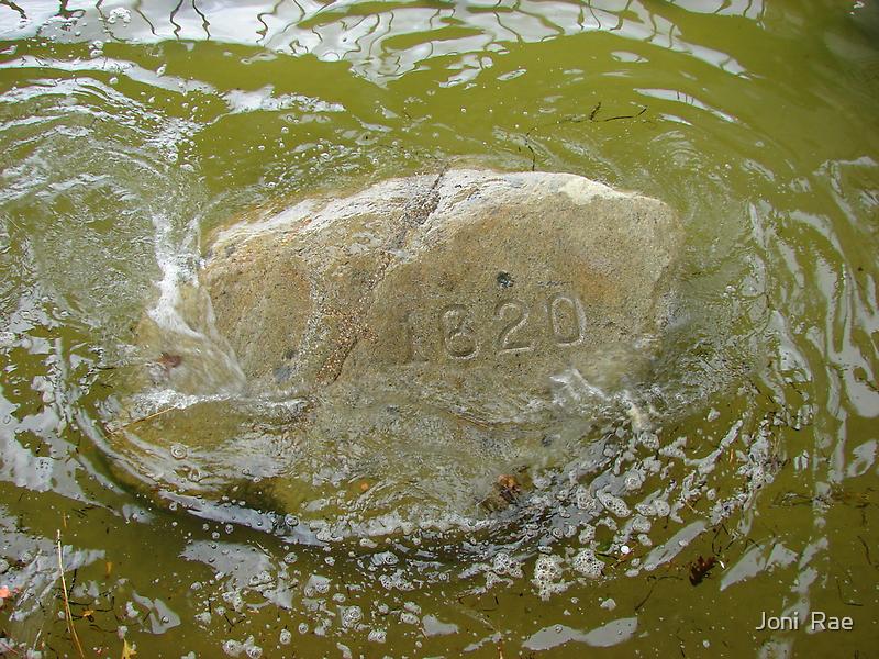 Plymouth Rock by Joni  Rae