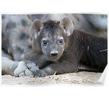 Hyena Cub Poster
