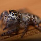 Spider Says Hi by Matthew Hutzell