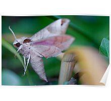 Pink Moth Poster